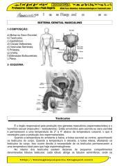 reproducao humana.pdf